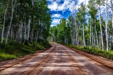 aspens-country-countryside-210065