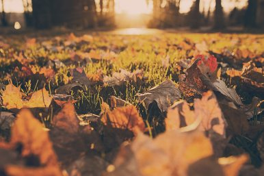 autumn-fall-foliage-380.jpg